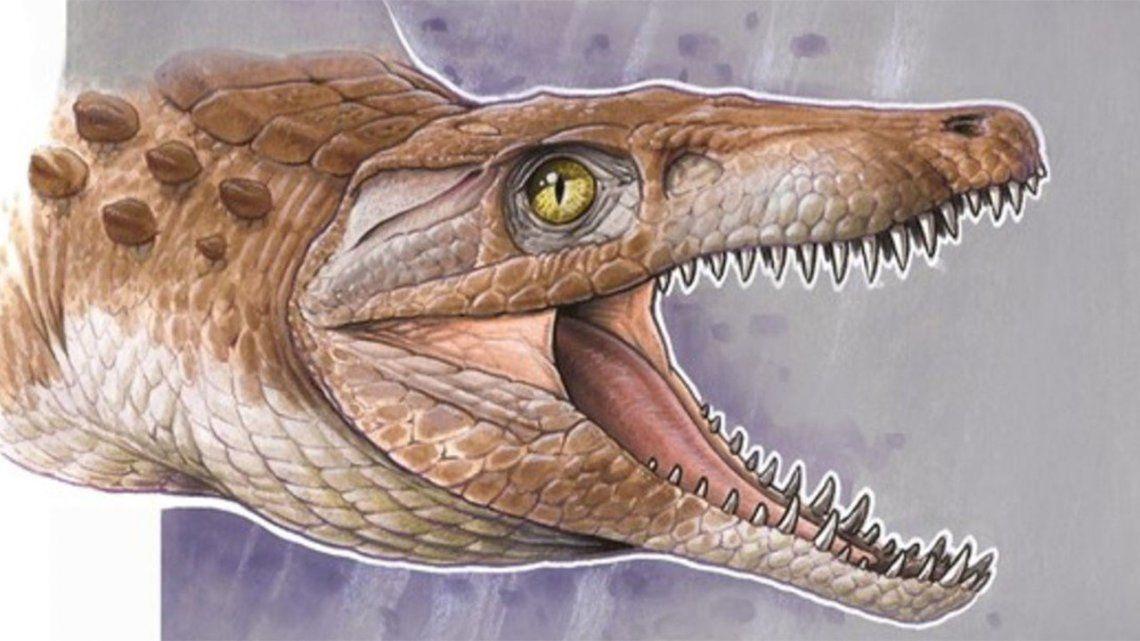 Descubrieron restos de un cocodrilo de 148 millones de años.