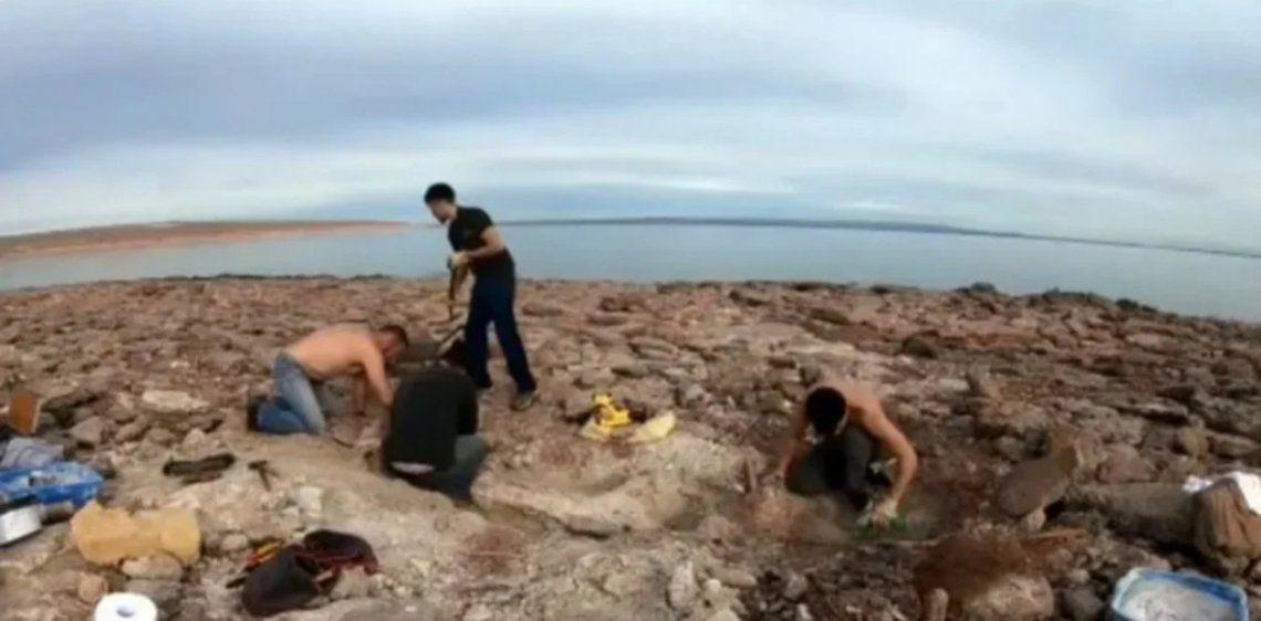 Neuquén: hallan los restos fósiles de un dinosaurio gigante