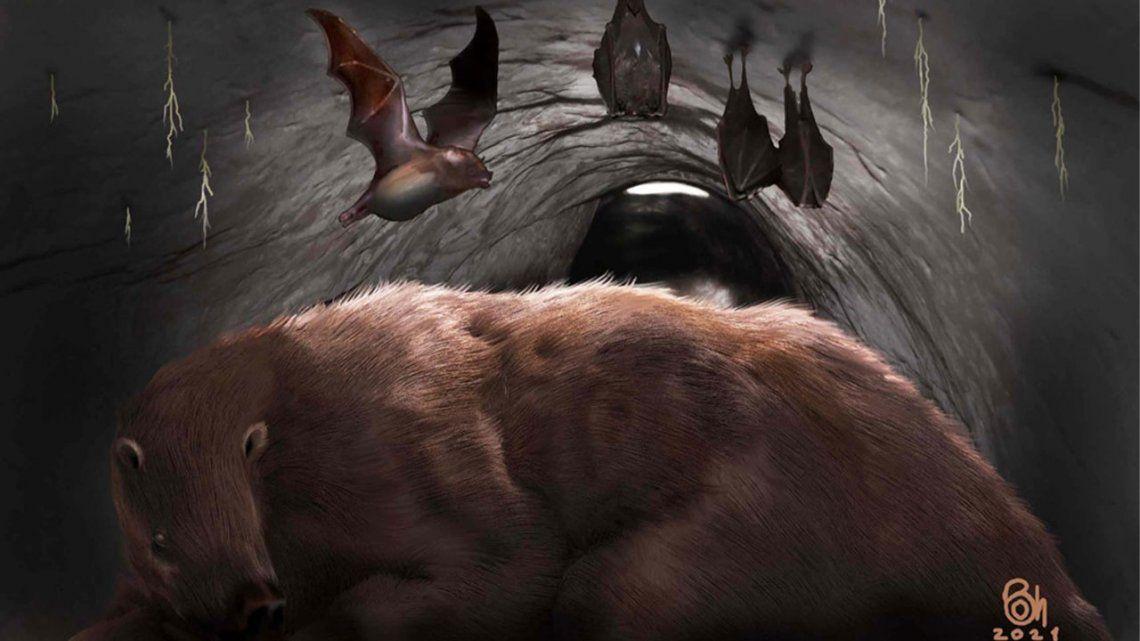 Miramar: encuentran el fósil de un vampiro gigante.