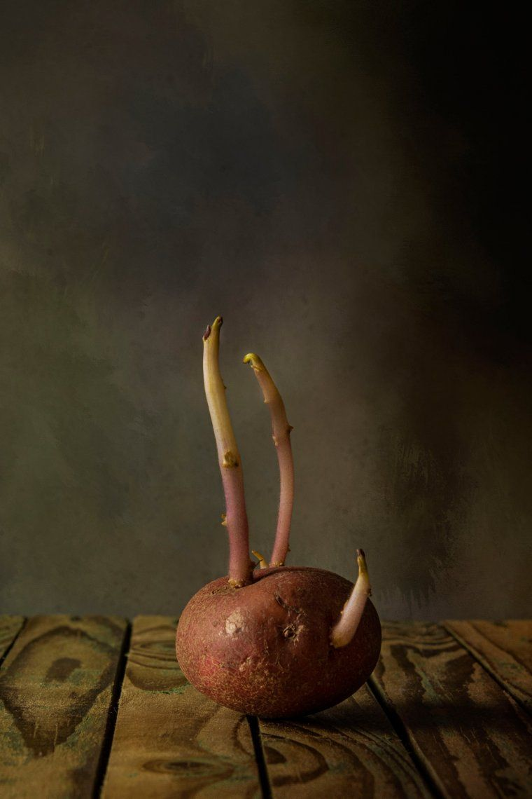 Crecimiento: Brotes de papa muy simples y bien iluminados. Martín Parr. Fotografía: Nigel Summerton