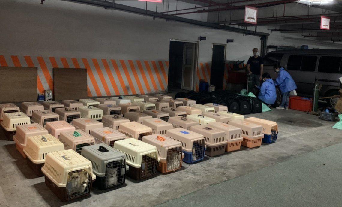 Taiwán: sacrifican a 154 gatos en el Día Internacional de Animales Sin Hogar