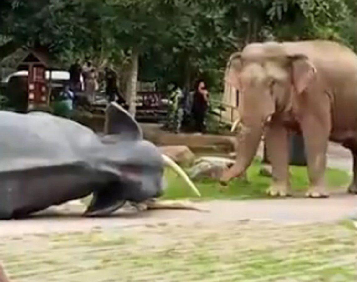 Elefante equivocado.