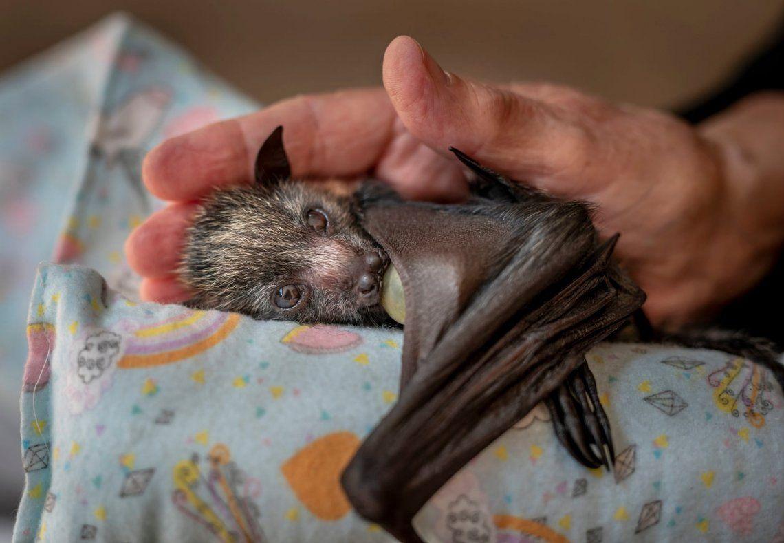 Revelan imágenes espectaculares del Wildlife Photographer of the Year 2021