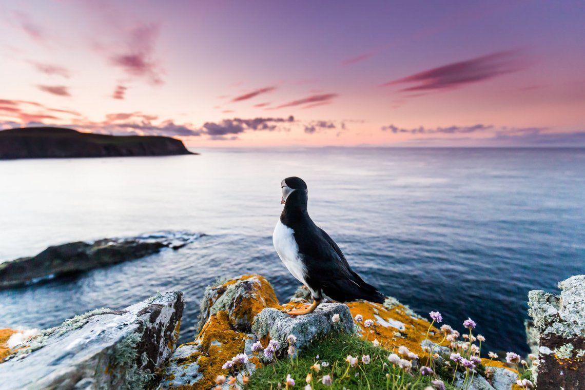 Las increíbles imágenes del concurso Bird Photographer of the Year 2021