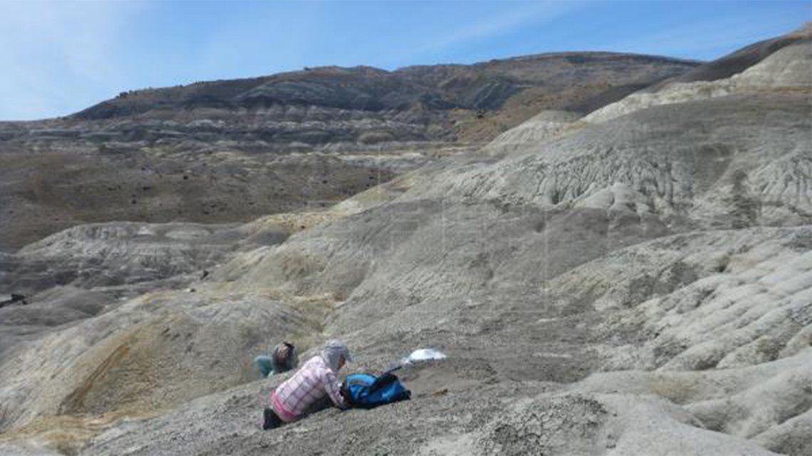 Encuentran los restos de anquilosaurio más australes de Suramérica.