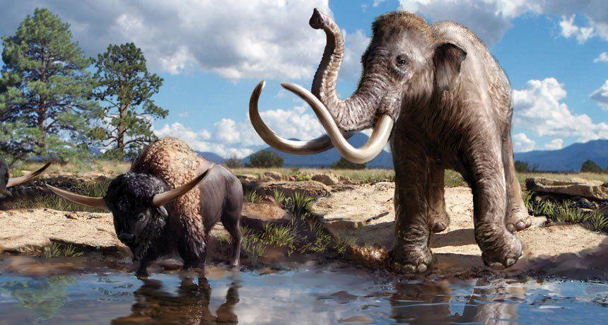 Estados Unidos: también se identificaron huellas de animales prehistóricos