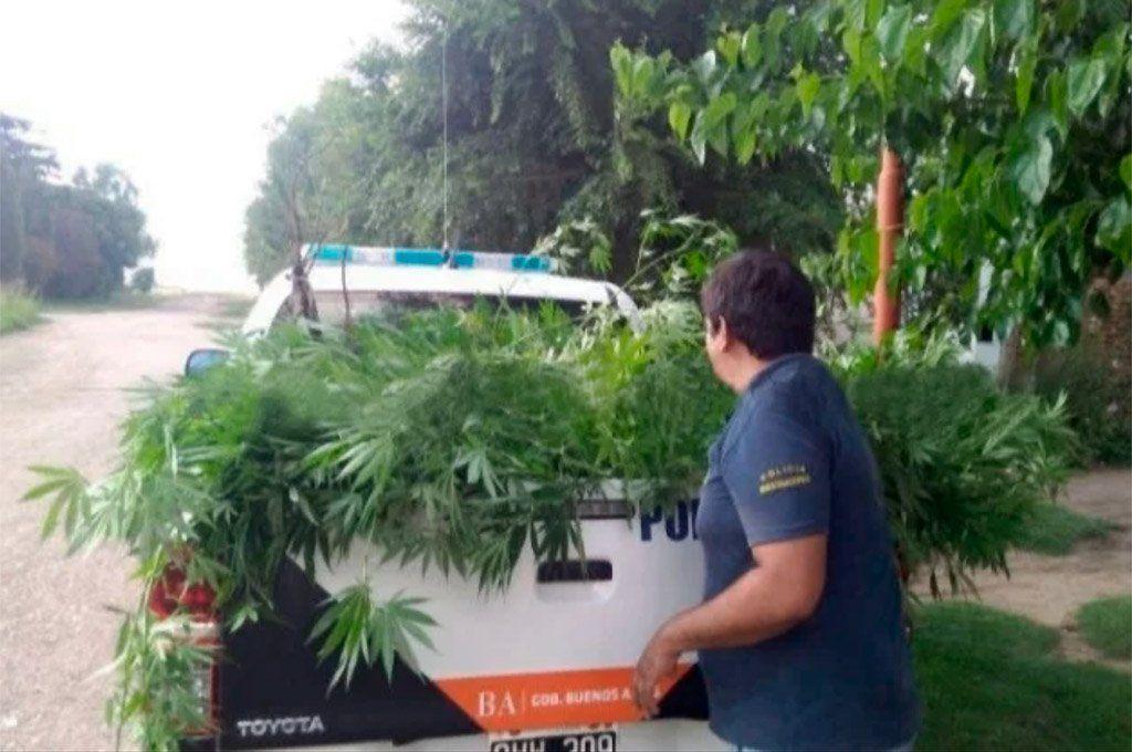 La Policía local había secuestrado gran cantidad de plantas de marihuana de la vivienda de Puán en 2019. Archivo.