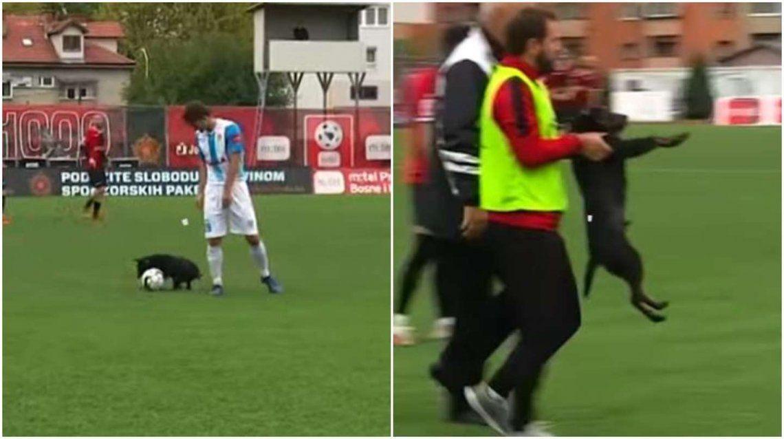 Un perro cortó una contra y le hizo un caño a un jugador