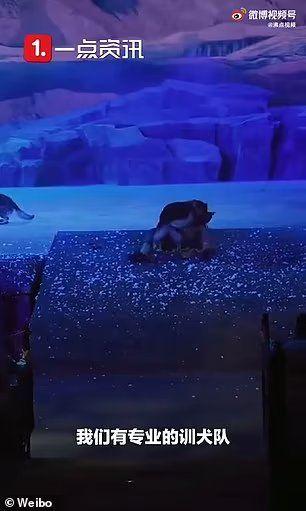 China: un lobo atrapa a un actor durante un espectáculo