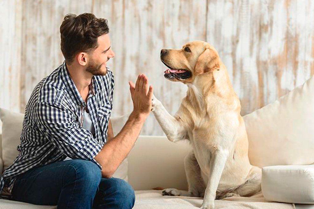 La ciencia intenta determinar porqué los perros son tan fieles a los seres humanos.