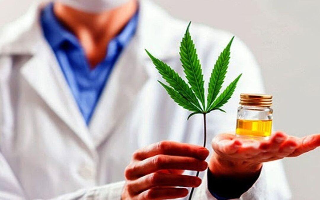 Cannabis medicinal: el Gobierno presentó proyecto de ley para desarrollar la industria
