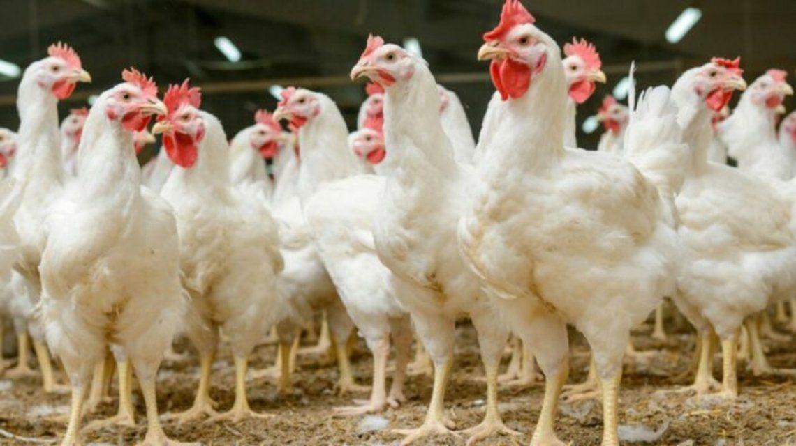 En Europa preocupa el incremento de casos de gripe aviar
