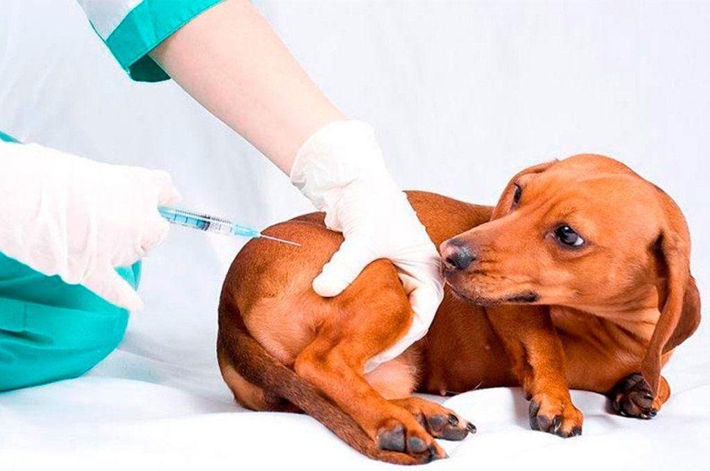 Advierten sobre la baja tasa de vacunación contra la rabia.
