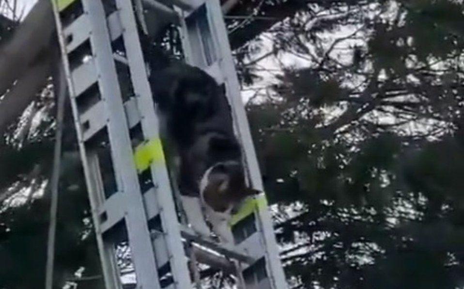 Inglaterra: un gato sorprendió a los bomberos.