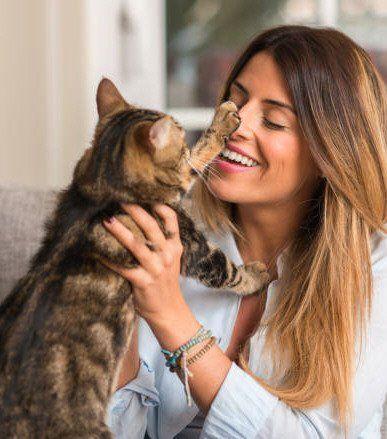 ¿Sabías que los gatos eligen a su persona favorita?