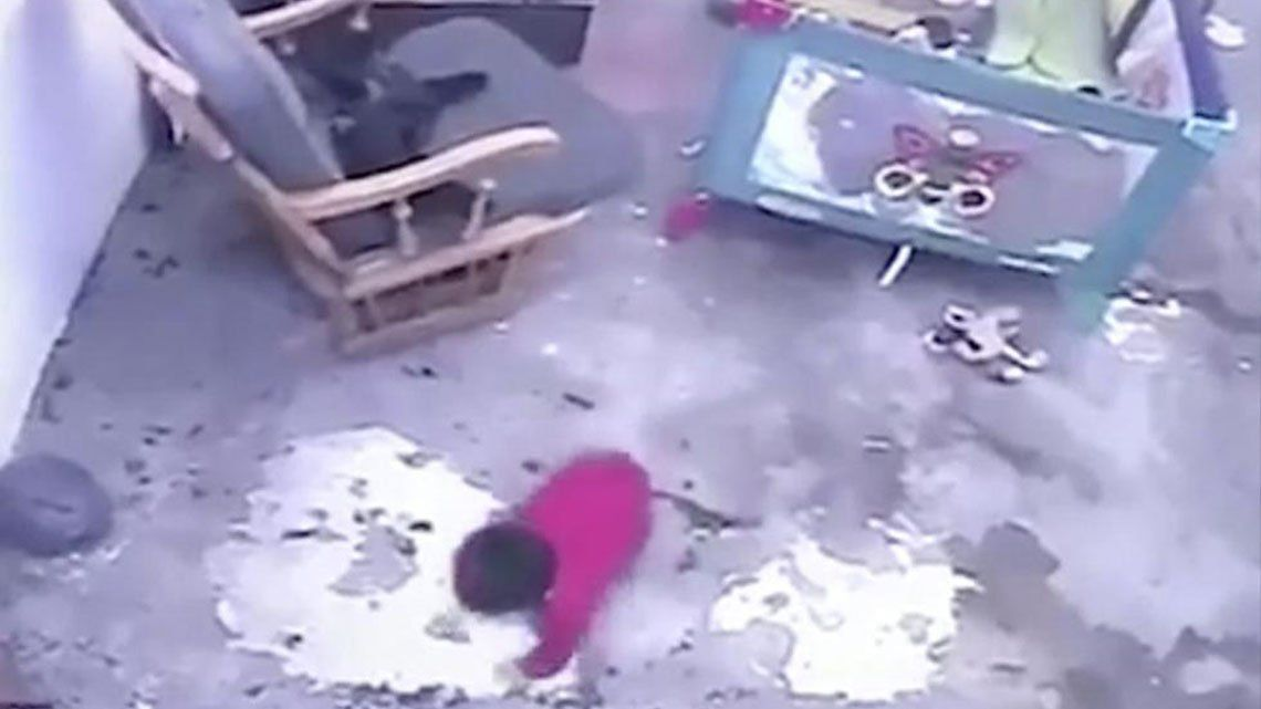 Colombia: una gata salva a un bebé de caer por las escaleras.