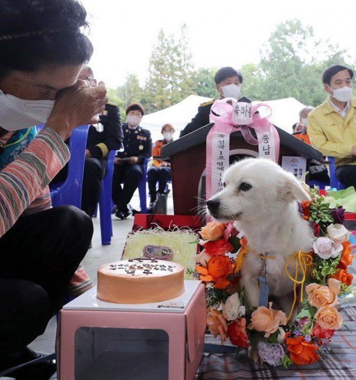 Todos los honores a un perro de rescate