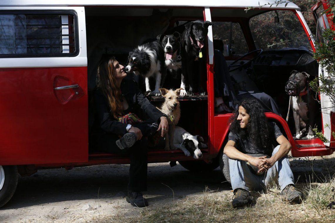 Día Mundial del Perro: el 70 por ciento que hay en el mundo no tienen hogar