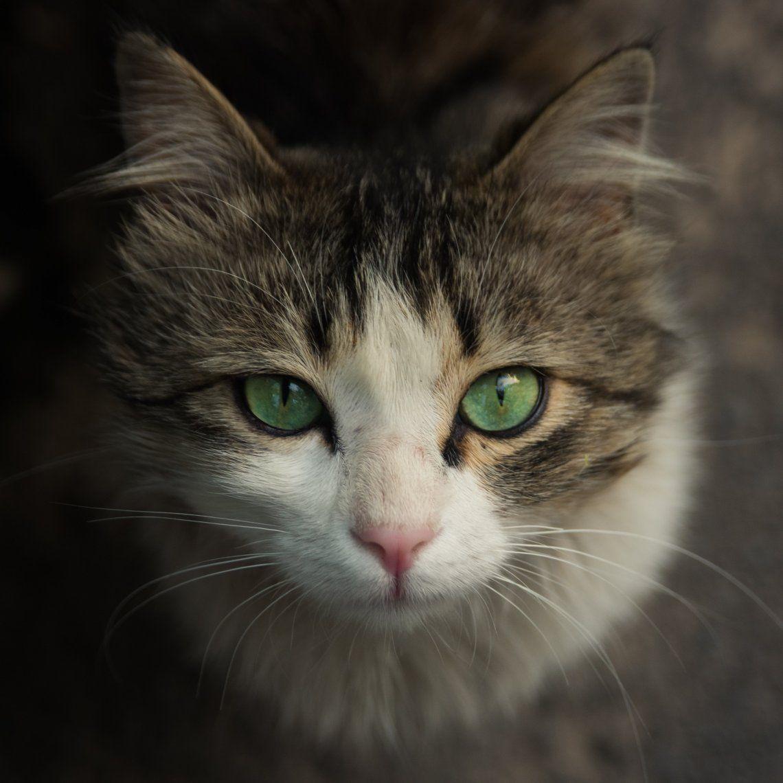 Además del 20 de febrero, agosto y octubre son meses en los que se celebra a los gatos.