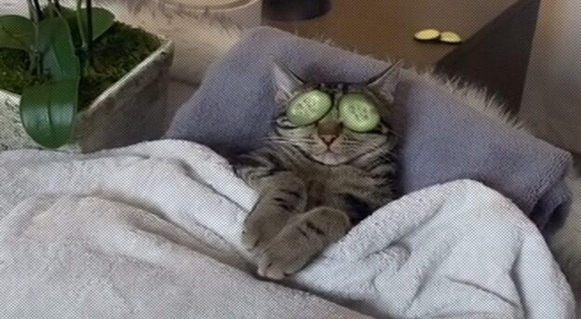 Tik Tok: gato adicto al spa.