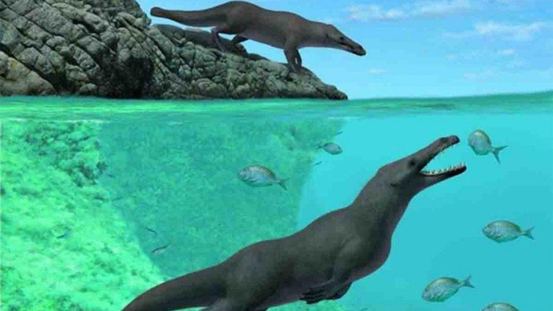 Descubren restos de una ballena con cuatro patas de 43 millones de años.