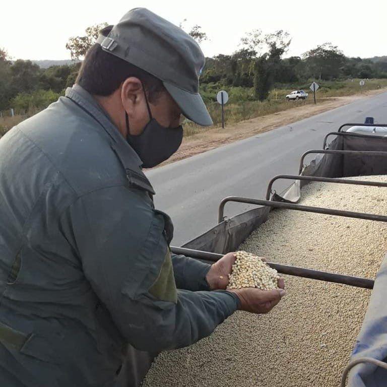 Corrientes: Gendarmería decomisó 451 toneladas de soja y 28 de maíz –  CONCORDIA345